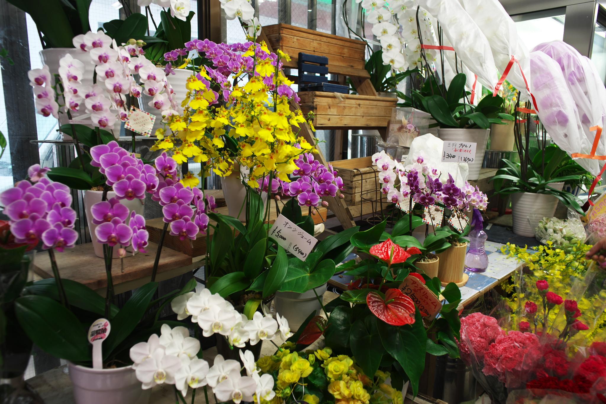 花の紫香園